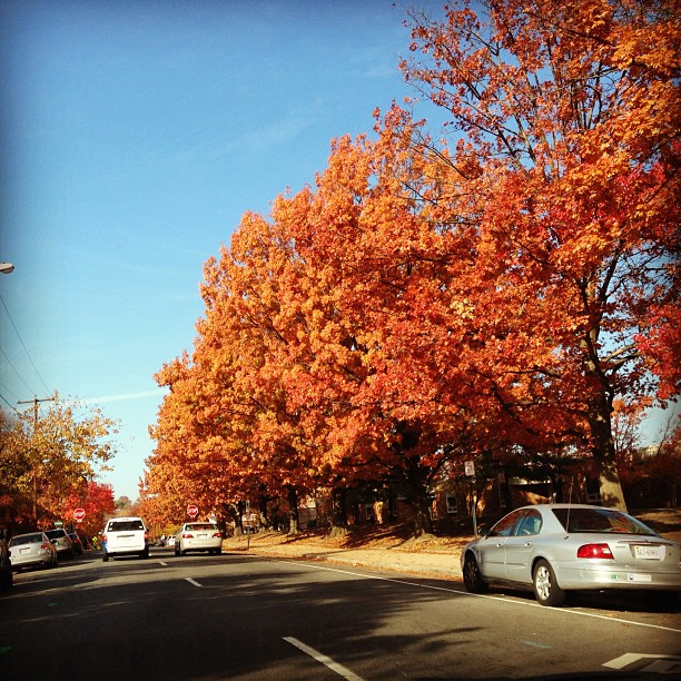 Beautiful colors in Alexandria, Virginia